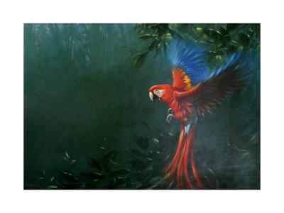 Scarlet Macaw 2-Michael Jackson-Giclee Print