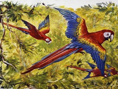 Scarlet Macaw (Ara Macao), Psittacidae--Giclee Print