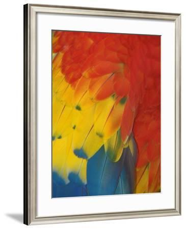 Scarlet Macaw Feathers-Bob Krist-Framed Photographic Print