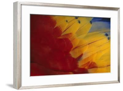 Scarlet Macaw Feathers-DLILLC-Framed Photographic Print