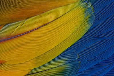 https://imgc.artprintimages.com/img/print/scarlet-macaw-wing-covert-feathers_u-l-q12t2ig0.jpg?p=0