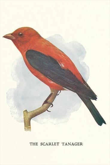 Scarlet Tanager--Art Print