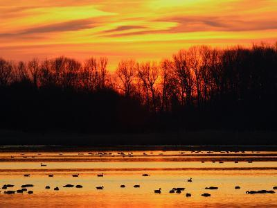 Scene at Bombay Hook National Wildlife Refuge, Delaware-George Grall-Photographic Print