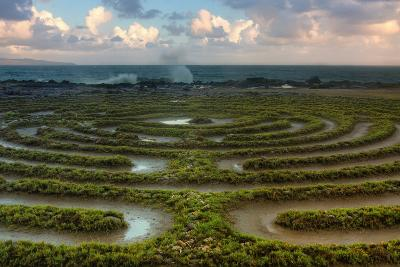 Scene at Kapalua Labyrinth Maui-Vincent James-Photographic Print