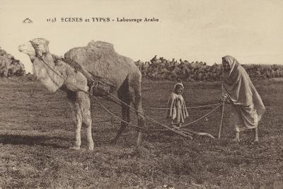 Scenes and Types - Arabic Ploughing--Photographic Print