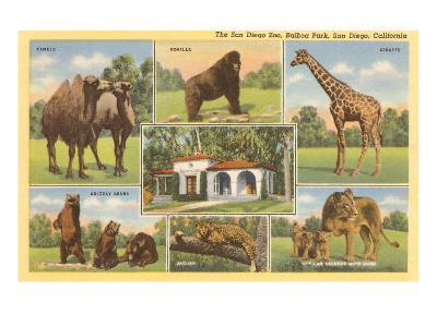Scenes of Animals from Zoo, San Diego, California--Art Print