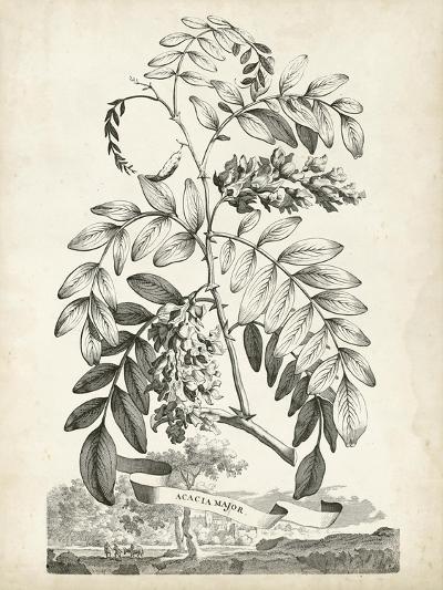 Scenic Botanical I-Abraham Munting-Art Print