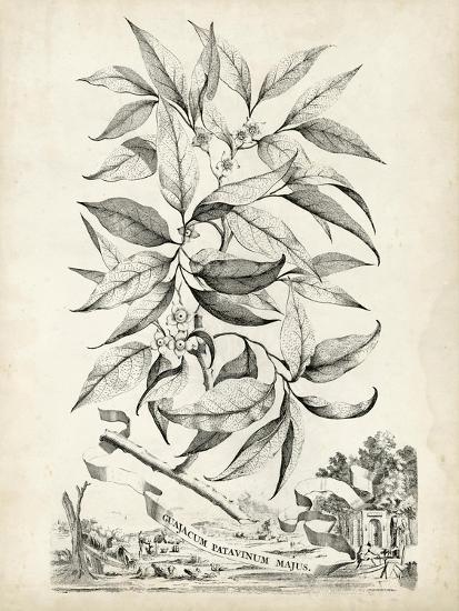 Scenic Botanical IV-Abraham Munting-Art Print