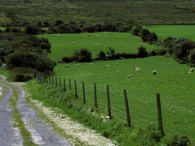 Scenic Dirt Road with Wildflowers, County Cork, Ireland-Marilyn Parver-Photographic Print