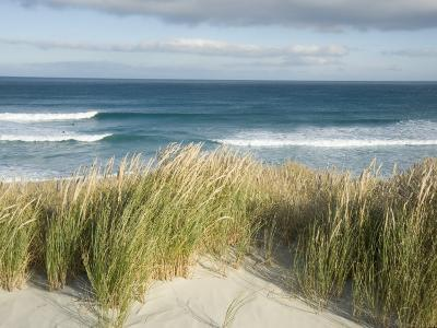 Scenic Hillside of the Beach and Grasses on the Pacific Ocean-Bill Hatcher-Photographic Print