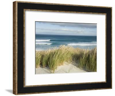 Scenic Hillside of the Beach and Grasses on the Pacific Ocean-Bill Hatcher-Framed Photographic Print