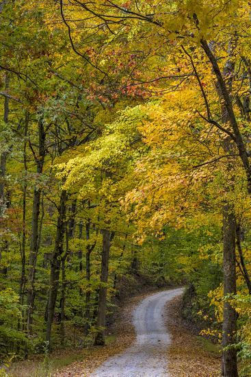 Scenic Road Through Autumn Forest Indiana, USA Photographic Print by Chuck  Haney | Art com