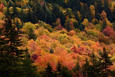 Scenic View from the Kancamagus Highway in the White Mountains of New Hampshire-Darlyne Murawski-Photographic Print