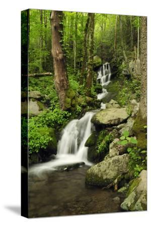 Scenic View of a Smoky Mountains Waterfall and Forest-Darlyne A^ Murawski-Stretched Canvas Print
