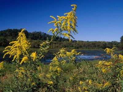 Scenic View of Goldenrod Flowers and Waterways-Raymond Gehman-Photographic Print
