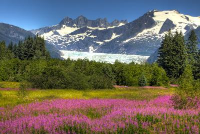Scenic View of Mendenhall Glacier and Fireweed in the Foreground, Juneau, Alaska-Design Pics Inc-Photographic Print