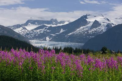 Scenic View of Mendenhall Glacier with Fireweed in the Foreground-Design Pics Inc-Photographic Print