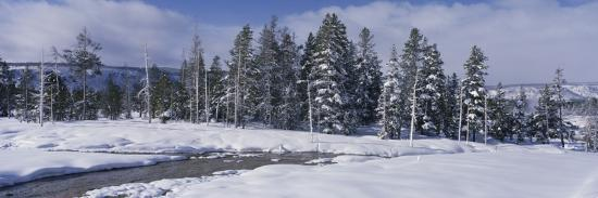 Scenic View of Pine Trees Coated with Snow in Winter-Jeff Foott-Photographic Print