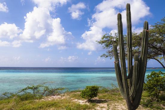 Scenic with Cactus by Coast, Mangel Halto Beach, Aruba, Lesser Antilles, Caribbean-Alberto Biscaro-Photographic Print