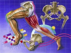 Schematic Showing Hip and Leg Motion