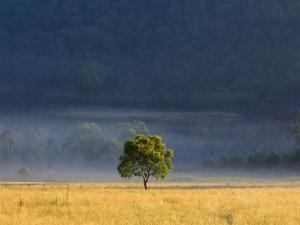 Gum Tree, Kosciuszko National Park, New South Wales, Australia, Pacific by Schlenker Jochen