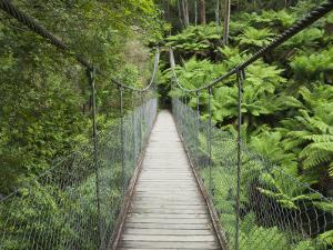 Suspension Bridge and Rainforest, Tarra Bulga National Park, Victoria, Australia, Pacific by Schlenker Jochen