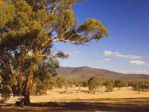 Trees and Fields, the Grampians National Park, Victoria, Australia, Pacific by Schlenker Jochen
