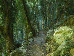 Walking Track Through Dorrigo National Park, New South Wales, Australia, Pacific by Schlenker Jochen
