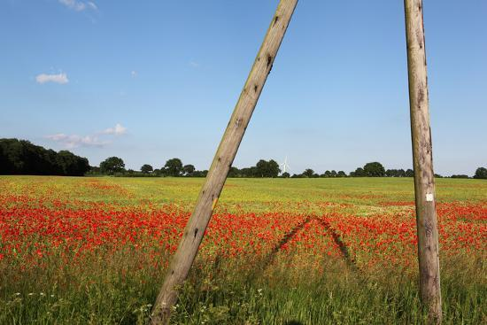 Schleswig-Holstein, Poppy and Rape-Catharina Lux-Photographic Print