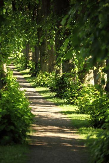 Schleswig-Holstein, Sieseby, Path Through Old Cemetery-Catharina Lux-Photographic Print