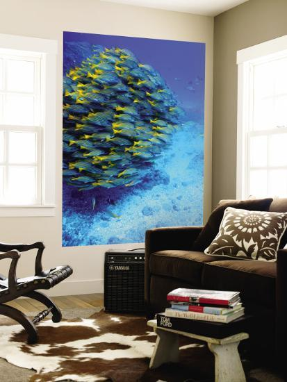 School Of Colourful Fish In Blue Waters Off Isla De Cano Wall Mural By Johnny Haglund Art