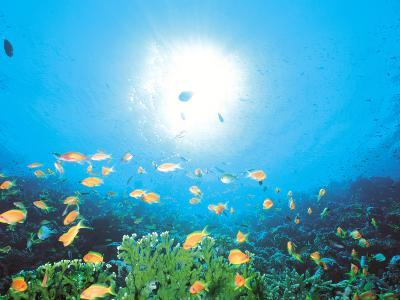 School of Fish And Sunlight, Undersea View--Photographic Print