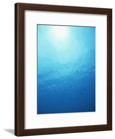 School of Fish off Grand Cayman Island, Western Caribbean Sea-James P. Blair-Framed Photographic Print