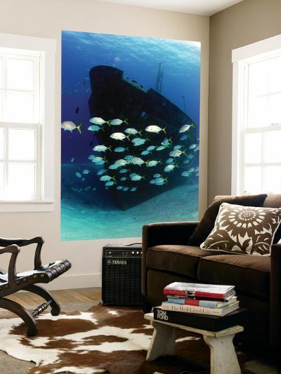 School of Horse-Eye Jack Fish Swmming by the Ray of Hope Shipwreck-Stocktrek Images-Wall Mural