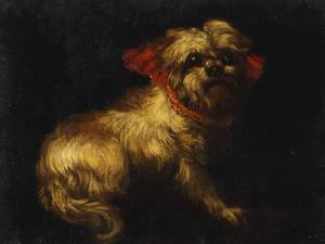 Maltese Terrier with a Red Collar by School of Madrid