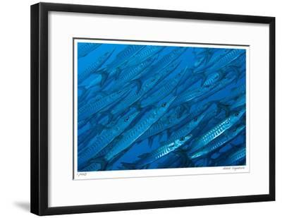 Schooling Barracuda-Jones-Shimlock-Framed Giclee Print