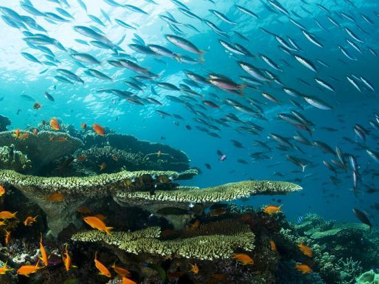 Schooling Fish over a Tropical Coral Reef-Mauricio Handler-Photographic Print
