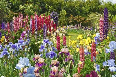 Schreiner Iris Gardens in Salem, Oregon-Craig Tuttle-Photographic Print