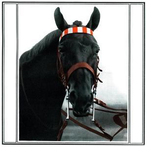Horse Still 1 by Schribler & Sons