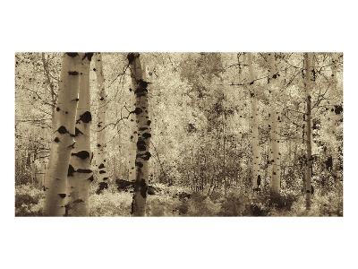 Schwartz - A Wisp of Gold-Don Schwartz-Art Print