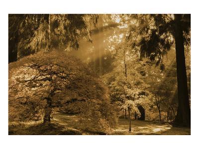 Schwartz - Bathed in Morning Light-Don Schwartz-Premium Giclee Print