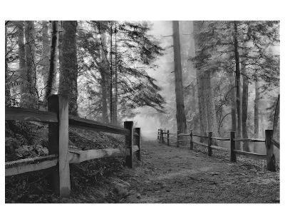 Schwartz - Down the Misty Path-Don Schwartz-Premium Giclee Print