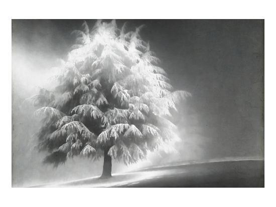 Schwartz - Enlightened Tree-Don Schwartz-Premium Giclee Print