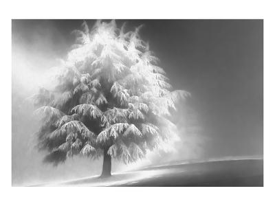 Schwartz - Enlightened Tree-Don Schwartz-Art Print