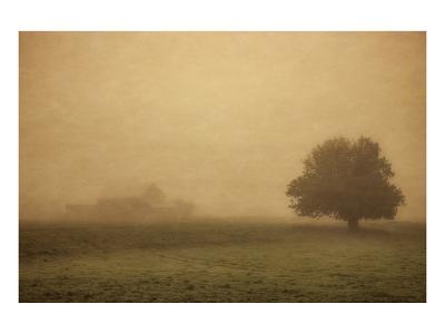 Schwartz - Foggy Barn-Don Schwartz-Premium Giclee Print