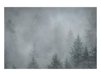 Schwartz - Foggy Pines-Don Schwartz-Art Print