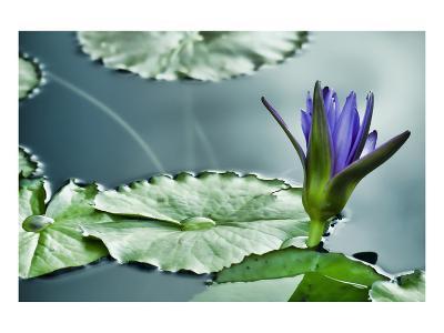 Schwartz - Lily on the Lake-Don Schwartz-Art Print