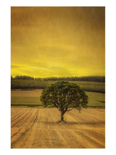Schwartz - Lone Tree at Sunset-Don Schwartz-Premium Giclee Print