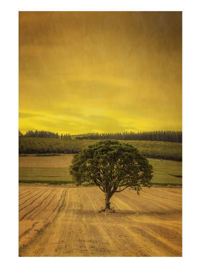Schwartz - Lone Tree at Sunset-Don Schwartz-Art Print
