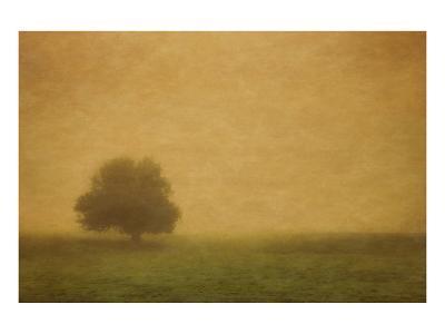 Schwartz - Silent and Still-Don Schwartz-Art Print